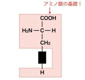amino acid basics